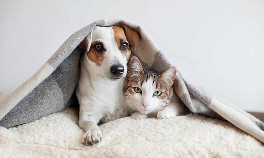 Mascotas sin barbijos: no se contagian ni transmiten el coronavirus
